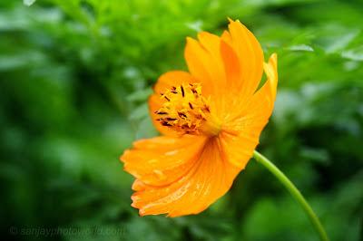 beautiful Yellow Flower