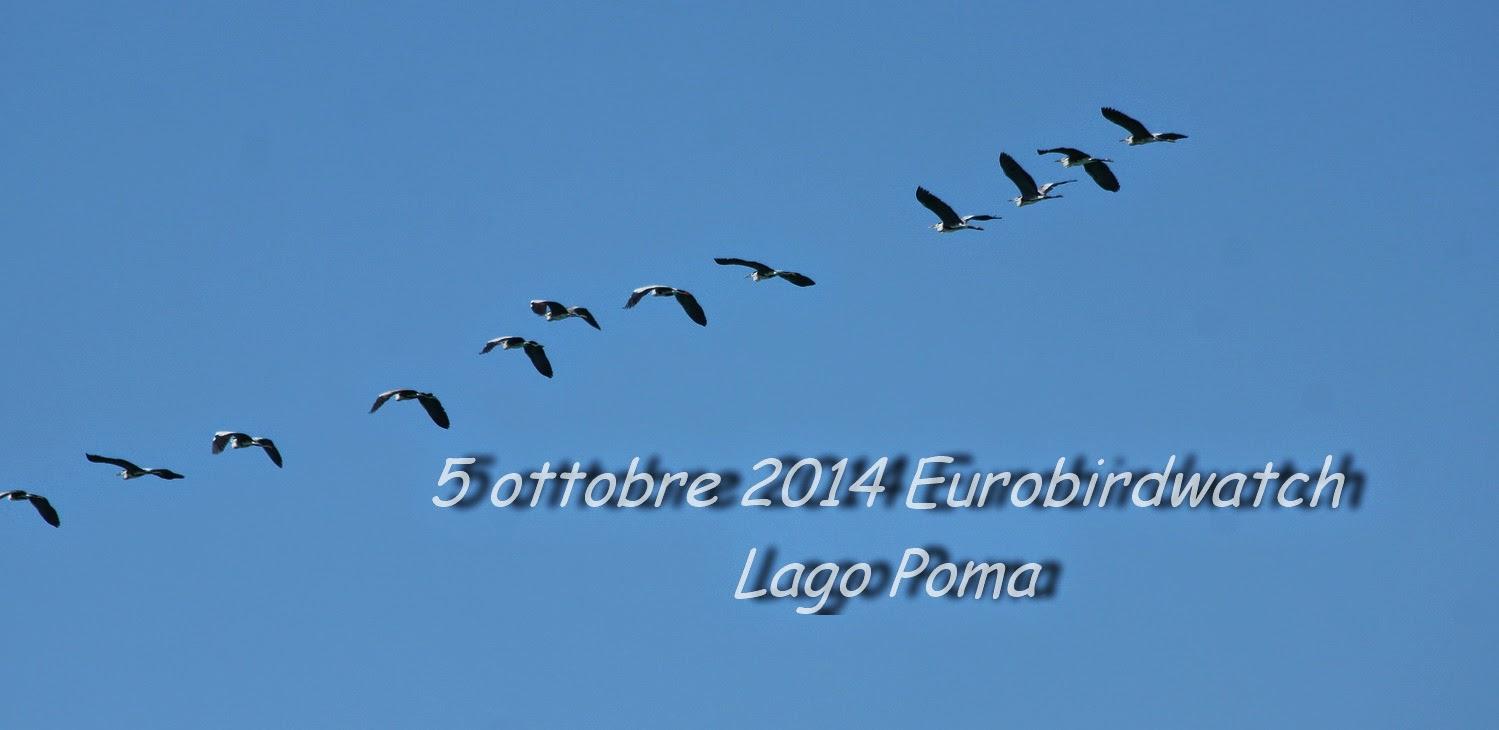 EUROBIRDWATCH 2014
