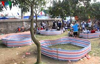 Gambar sabung ayam vietnam di acara festival