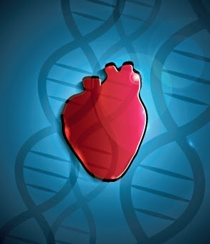 Gene Therapy Heart Transplant SERCA2a Protein Treatment