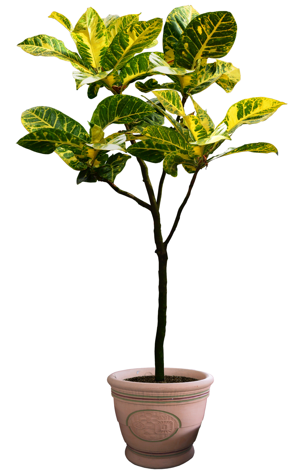 Pleasures in helping others beautiful transparent plants for Plante a planter