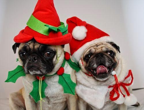 hunde w nschen frohe weihnachten alles rund um welpen. Black Bedroom Furniture Sets. Home Design Ideas