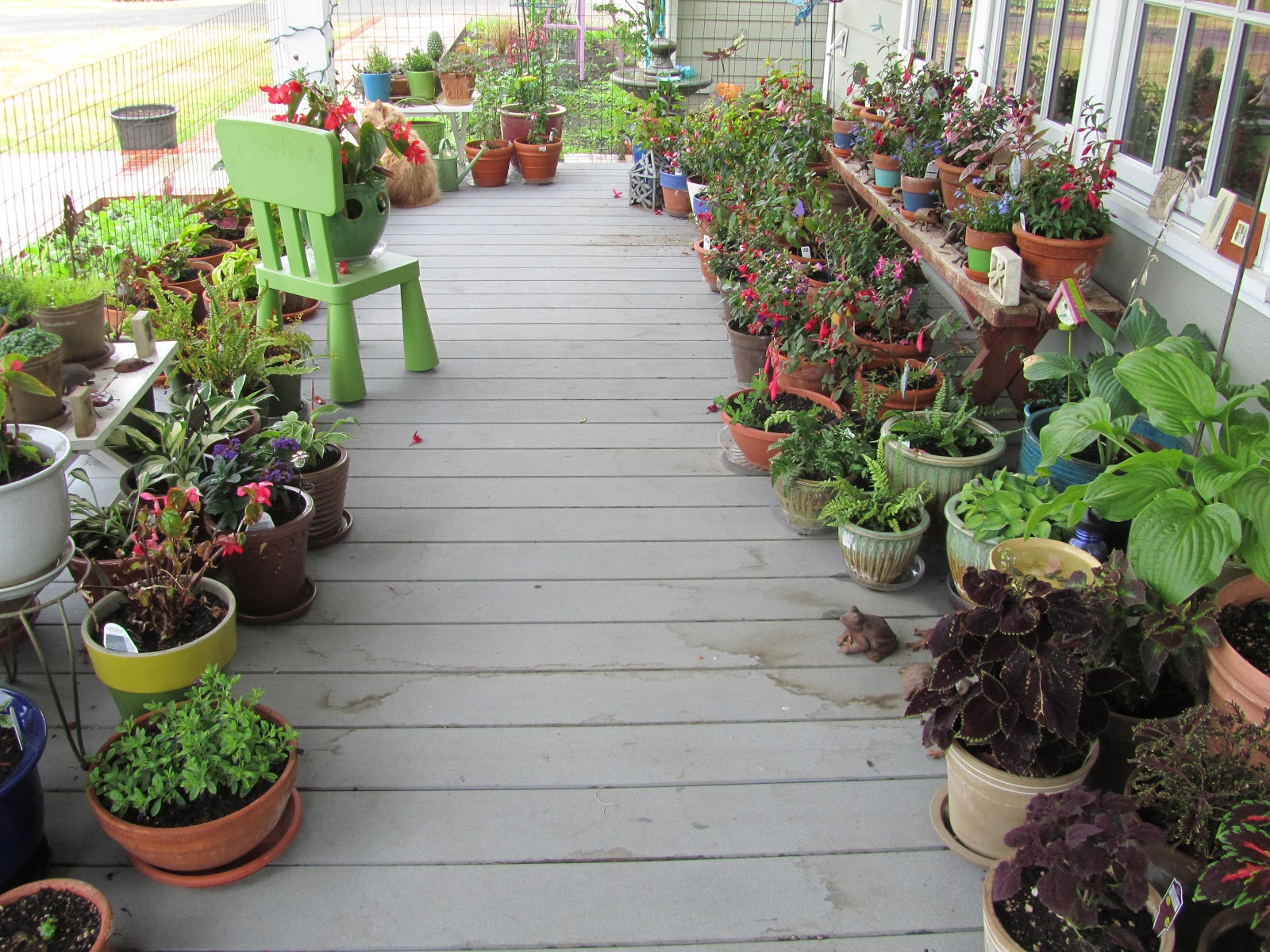Plants for a north facing garden - The Front Porch Is North Facing And Shaded As You Can See It Is Protected From Deer With A Small Wire Fence And The Strategic Placement Of Chairs On The