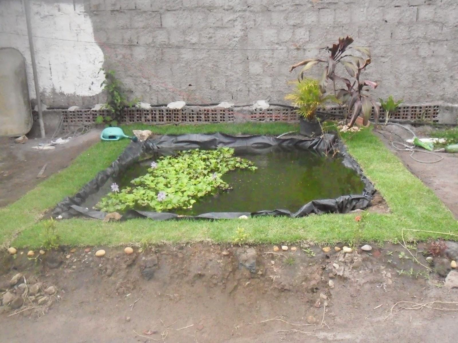 Cria o de tambaqui e til pias em tanques de lona brasil for Como criar tilapias