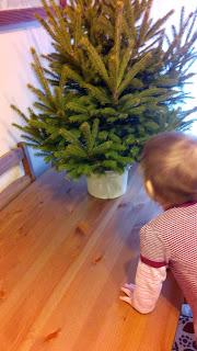 drzewko świąteczne, choinka