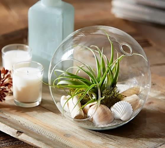 Miniterrario en bola de cristal