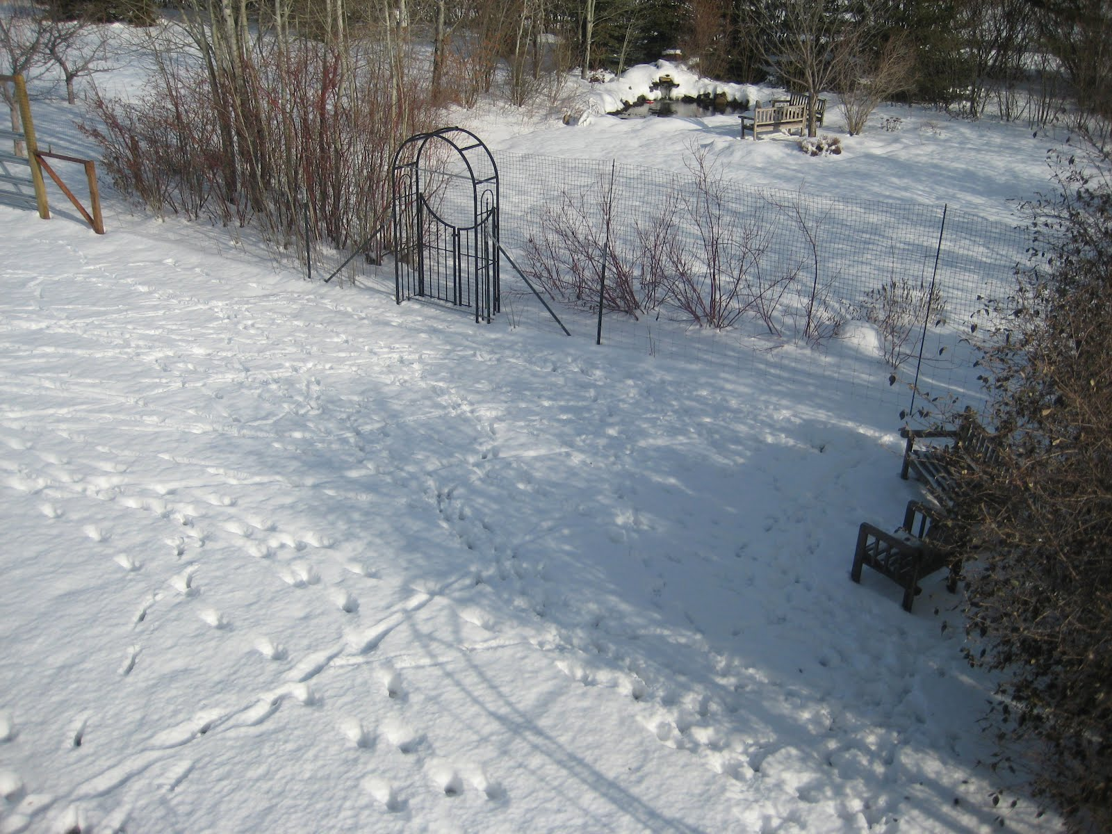 keep deer out of the garden part 2 susan 39 s in the garden