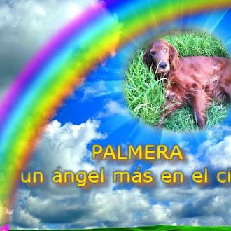 PALMERA, un ángel más en el cielo