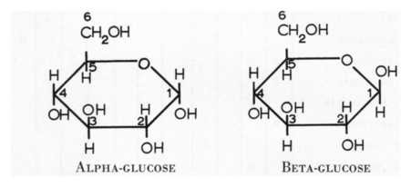 Together Revising: AS Biology F212: Carbohydrates