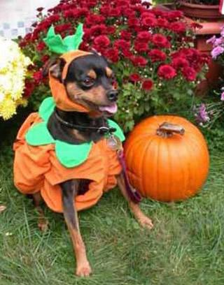 Frases e imagens engraçadas para o Halloween - Recados Facebook