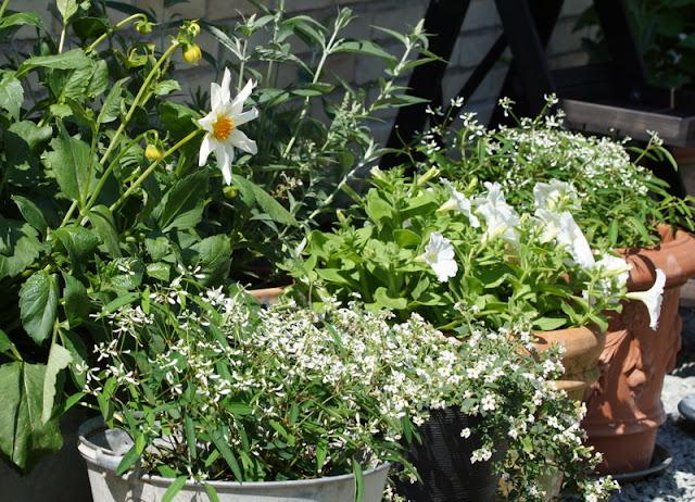 Fra frø til blomst: min krukkehave   del i