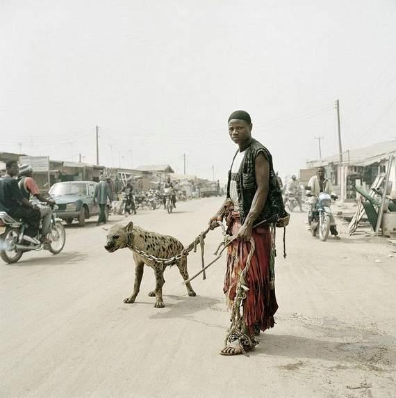 pet-bizarro-hiena