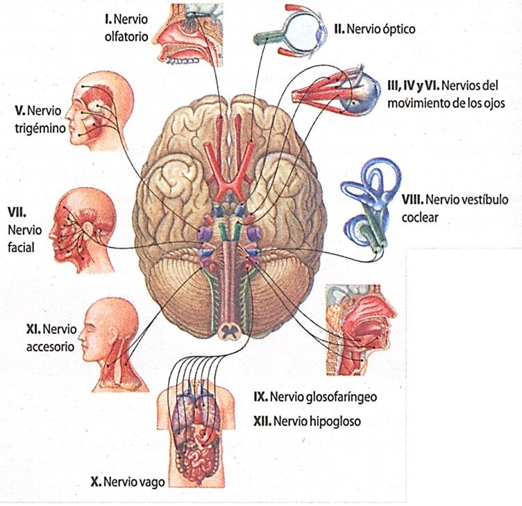 Biología.: 2013