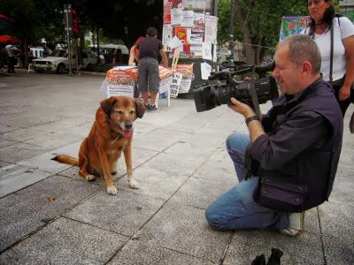 Η ιστορία ενός σκύλου