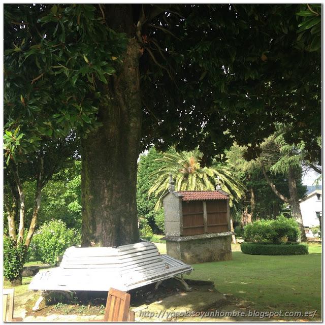 Pedazo magnolio centenario con banco alrededor