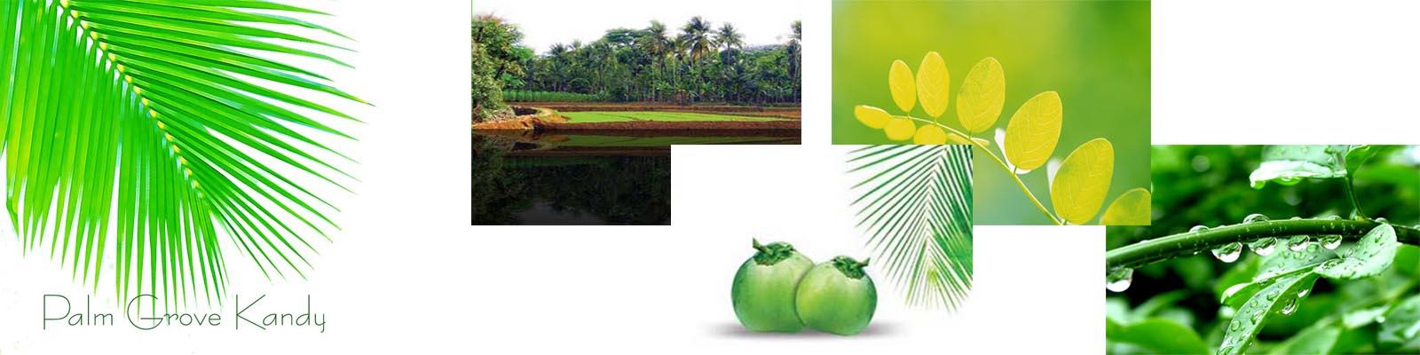 Palm Grove Kandy