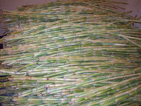 fresh_sugar_cane_suppliers
