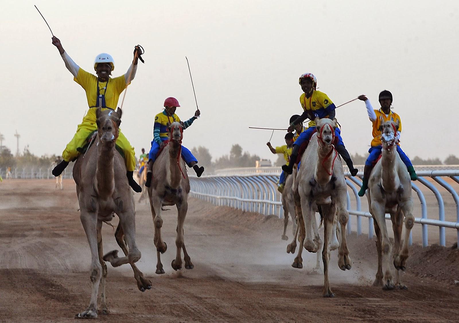 2014, Animal, Camel, Camel Race, Ceremony, Cultural, Festival, Heritage, Jenadrivah, Jockey, Race, Riders, Riyadh, Salman bin Abdulaziz, Saudi Arabia, Sports,