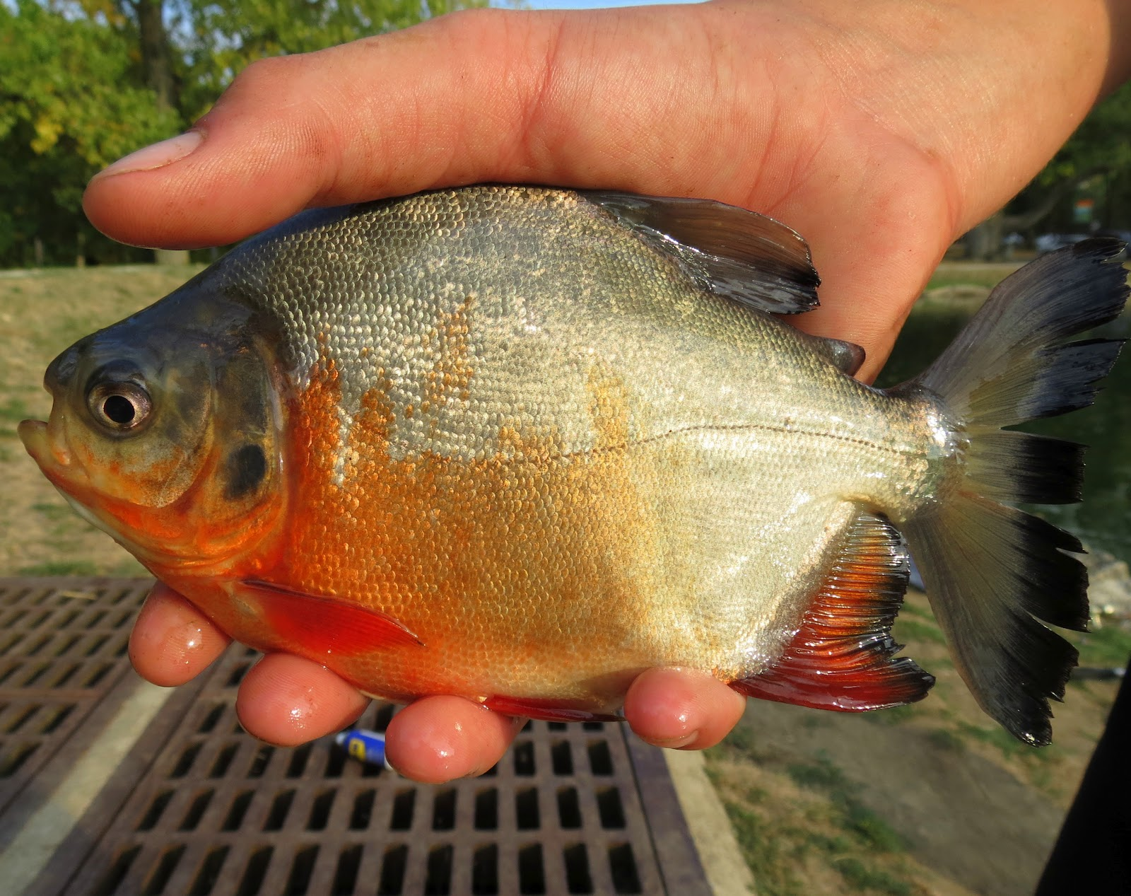 how to prepare caught fish