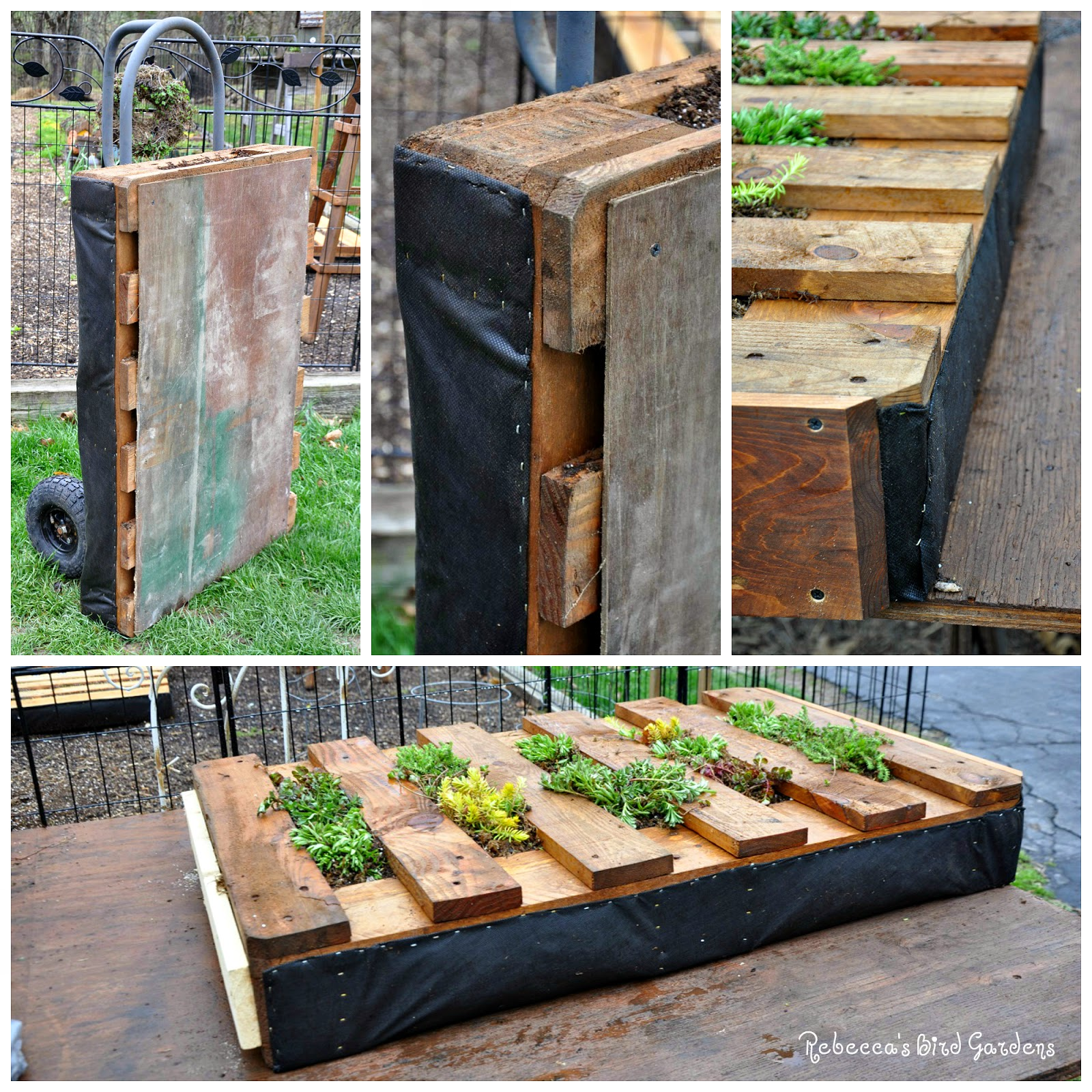 After I Planted The Sedums, I Kept The Pallet Horizontal For 2 Weeks To  Allow The Roots To Become Established. Once The Pallet Was Vertical, I  Removed The ...