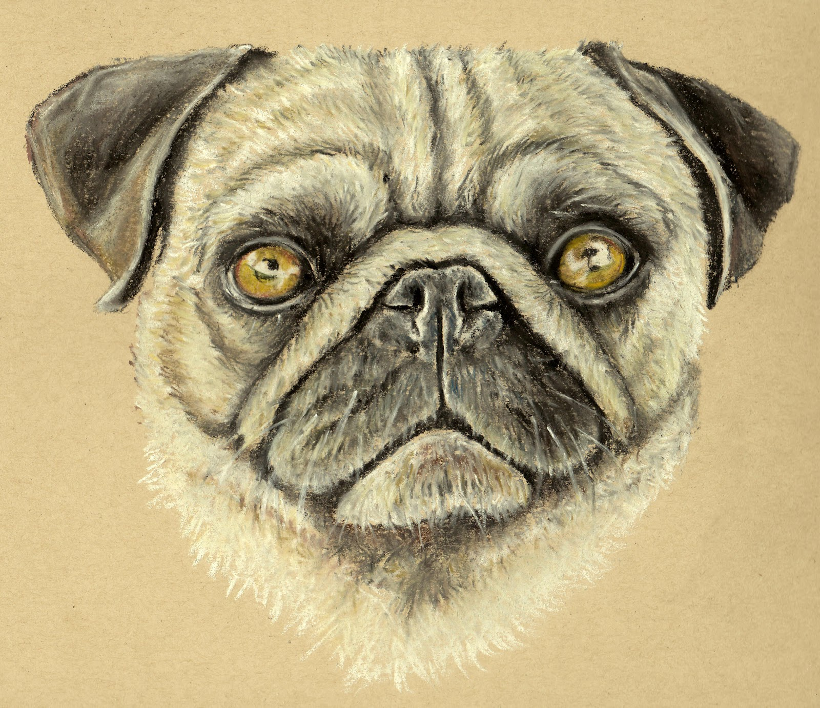How To Draw Baby Pug