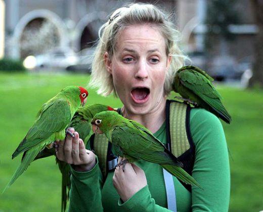 animalia,chordata,bird,aves,neognathae,cacatuoidea,