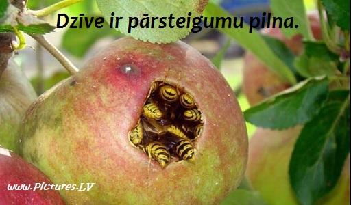ābols pilns ar lapsenēm