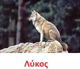 https://dl.dropboxusercontent.com/u/72794133/%CE%96%CE%A9%CE%91/wolf2.wav
