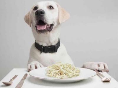 Alimentación en los perros