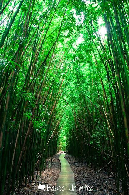 BabcoUnlimited.blogspot.com - Maui, Bamboo Forest, Haleakala National Park