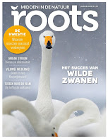 Roots Januari 2018