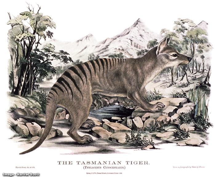 http://www.naturalworlds.org/thylacine/art/illustration/image_09.htm