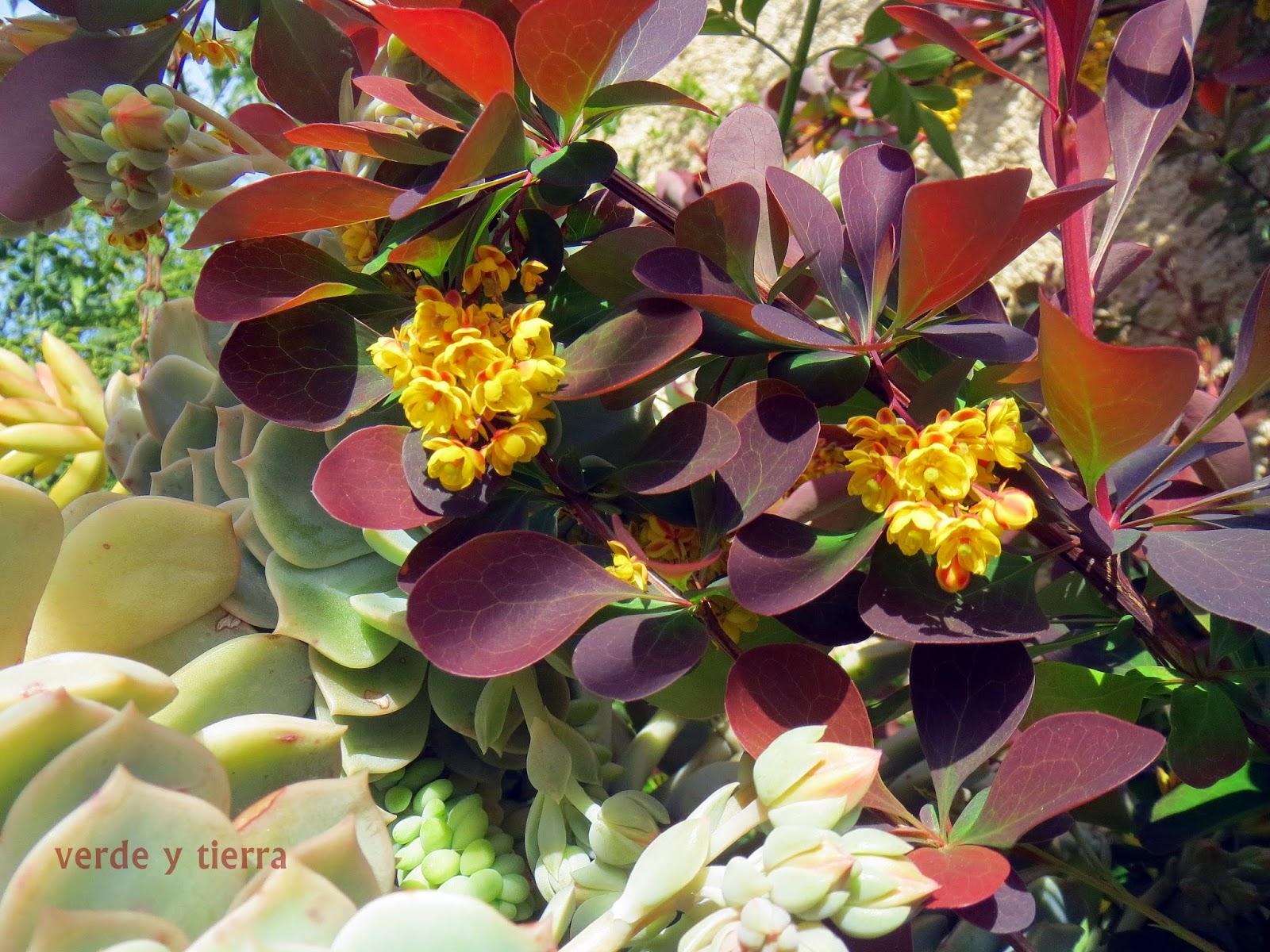 Fotos De Jardin Con Flores - Foto de Hosteria Alta Montana, Valle Hermoso: jardín con