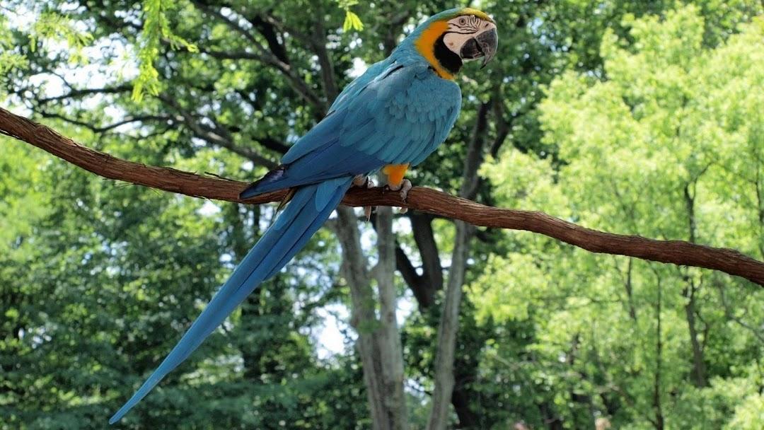 Parrot on Tree HD Wallpaper