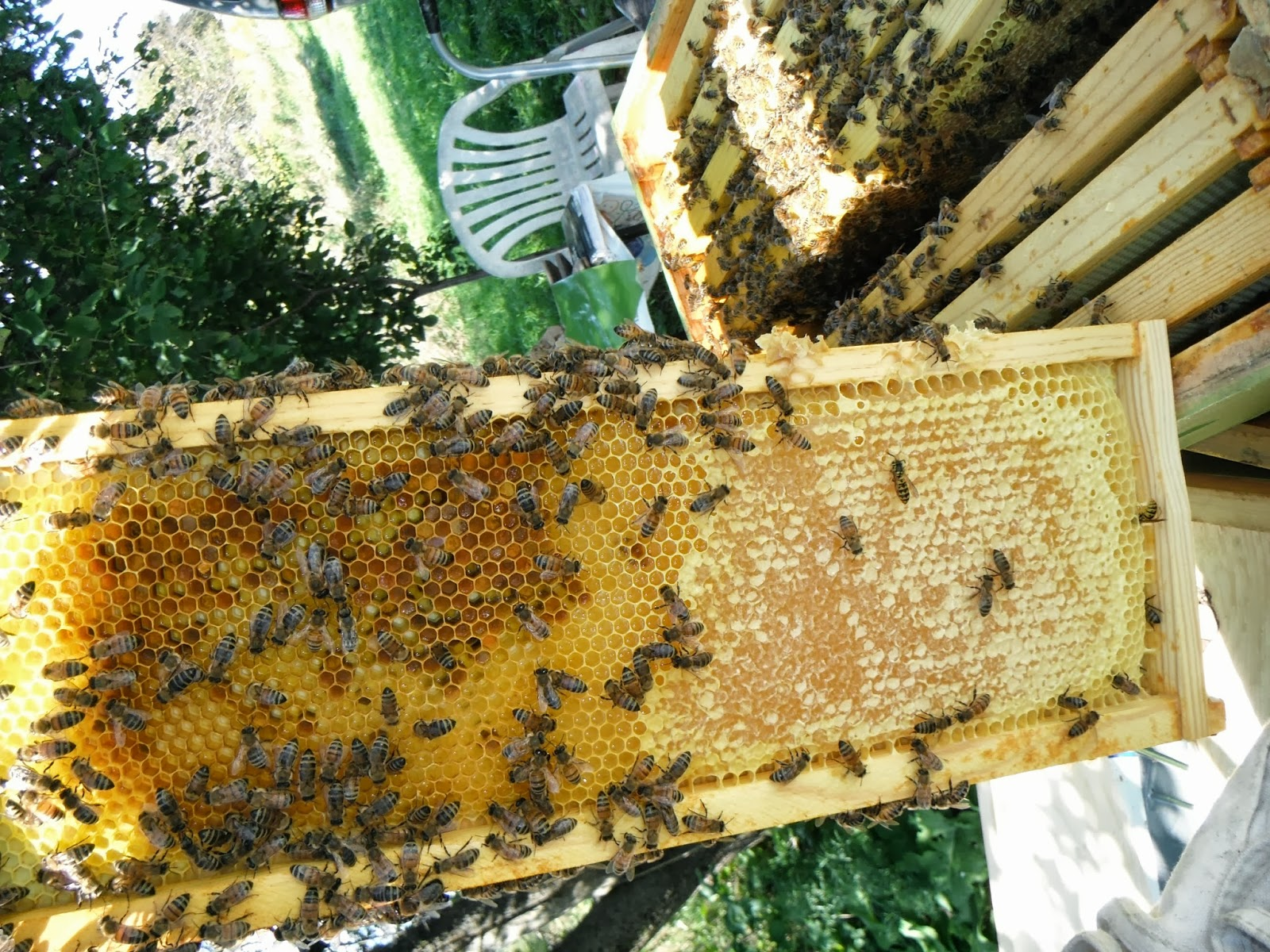 The Bee Journal: Subtle Differences between Frames of Brood and Honey