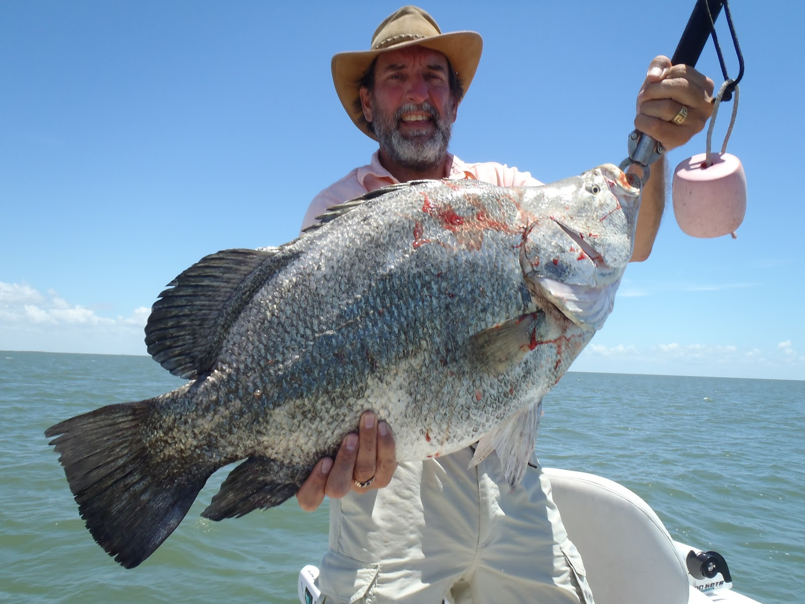 Big fishes of the world tripletail lobotes surinamensis for Triple tail fish