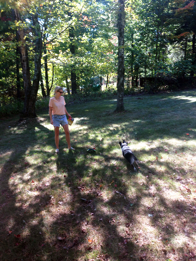 Playing fetch with a frisbee with Wally, fall Upstate New York at the cottage