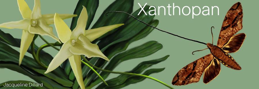 Xanthopan