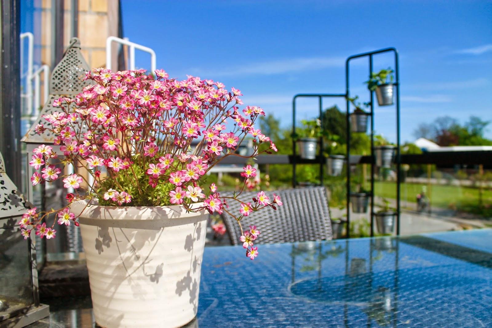 altan blomster