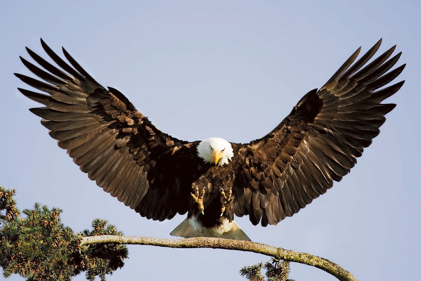 Eagle Most Beautiful Images | Top hd animals wallpapers