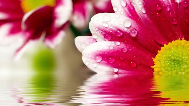 hình nền hoa đẹp với biển nước