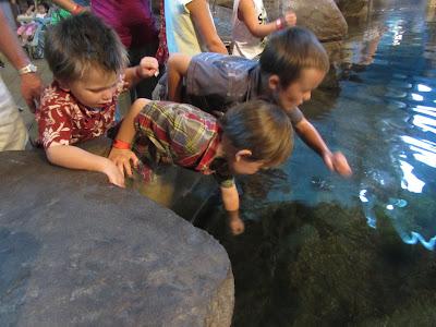 Sharks-The Unlikely Homeschool