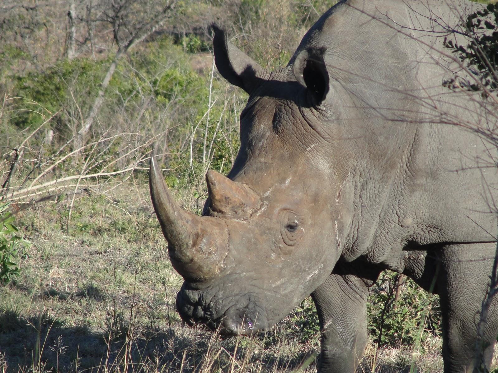 Tshokwane Safaris