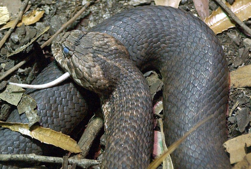 Top 10 Most Dangerous & Venomous Snakes Of The World | The ...