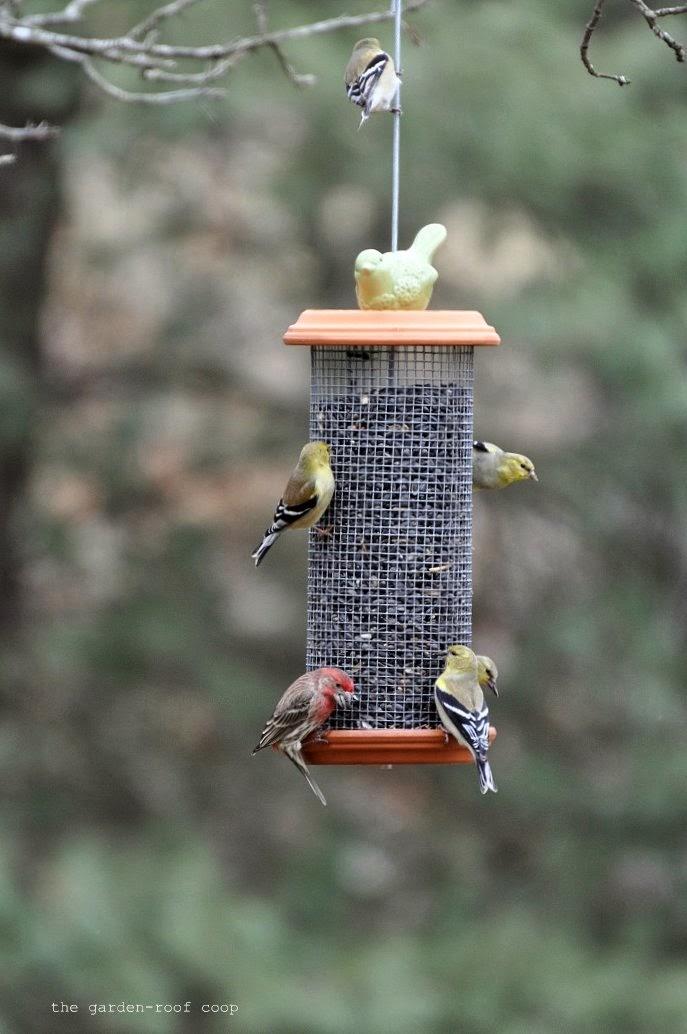 Rebecca 39 S Bird Gardens Blog Diy Sunflower Tower Bird Feeder