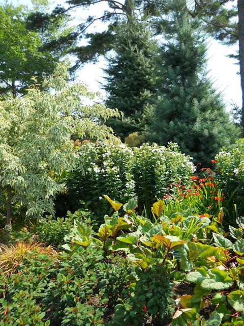 Anemone Times Coastal Maine Botanical Garden