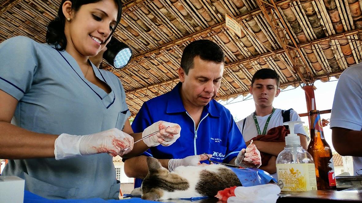 Resultado de imagen para veterinaria sena