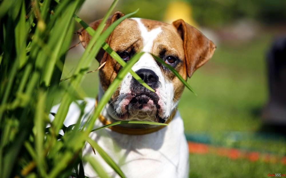 imagenes de perros de raza