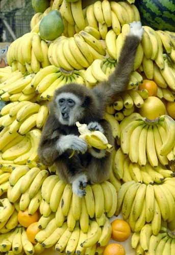 اهمية الموز The importance of bananas
