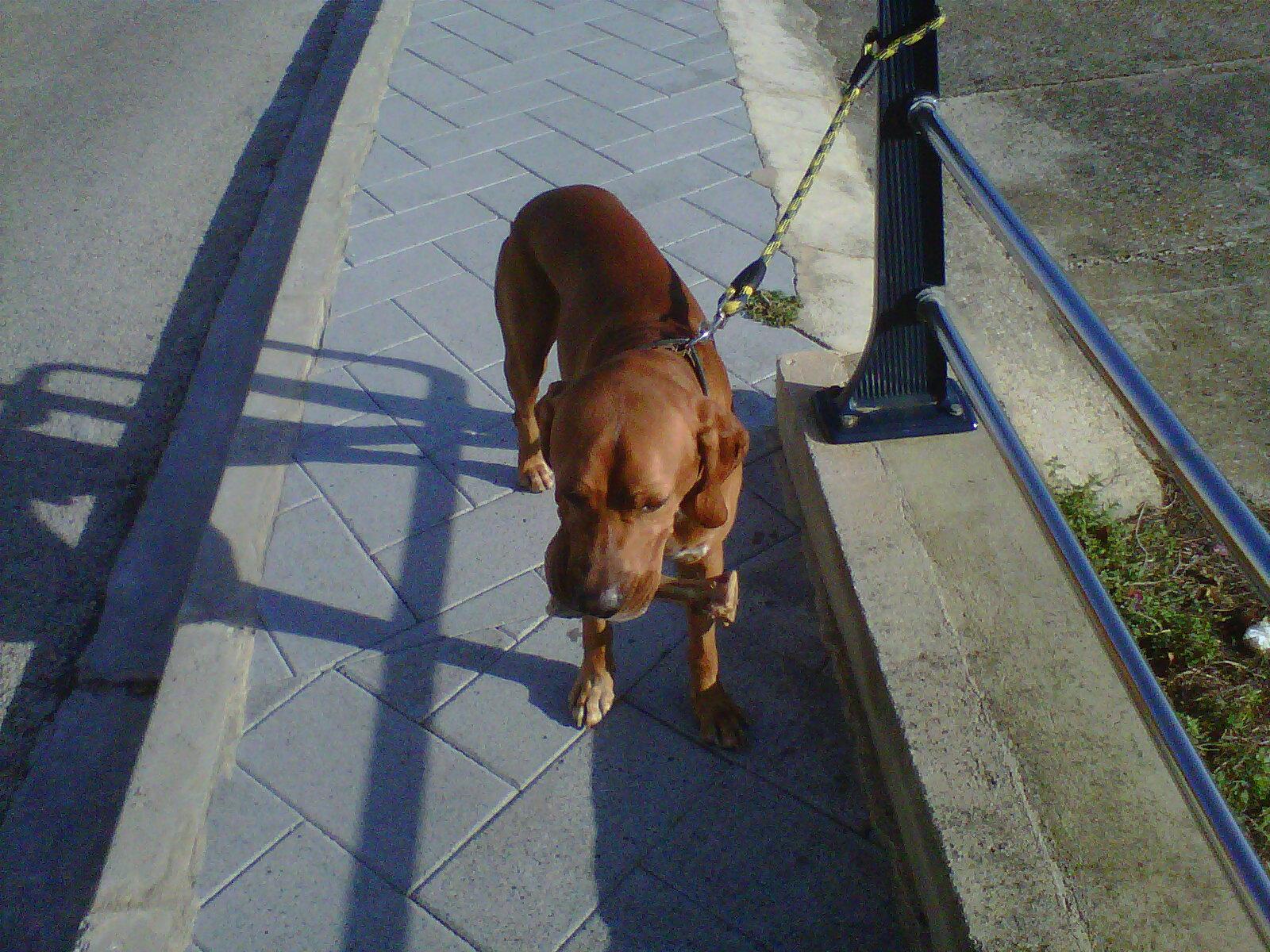 El estanque de la memoria poes a actual el perro que for Estanque para perros